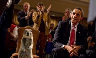 Obama Crasher Squirrel