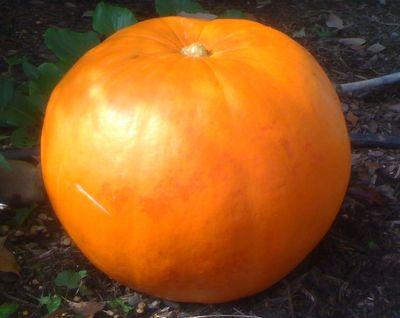John Boehner Gourd