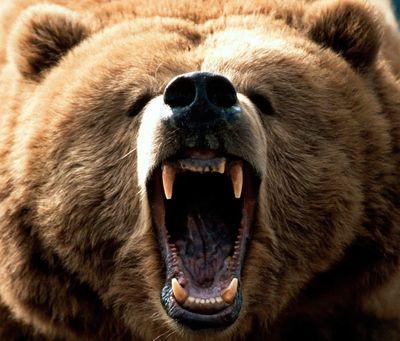 Free-Roaming Bear