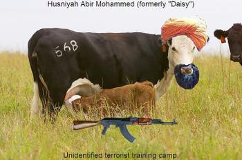 Terrorist_cow